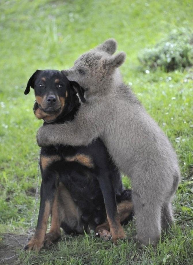 15 animalute se uita urat la noi - Poza 9