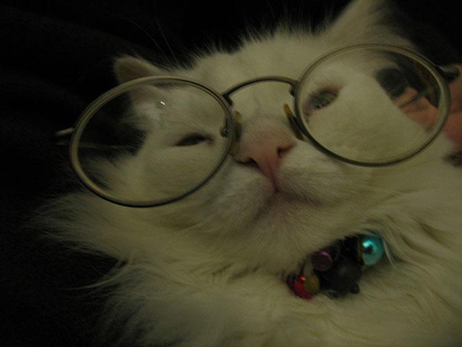 15 fotografii cu animale educate si inteligente - Poza 2