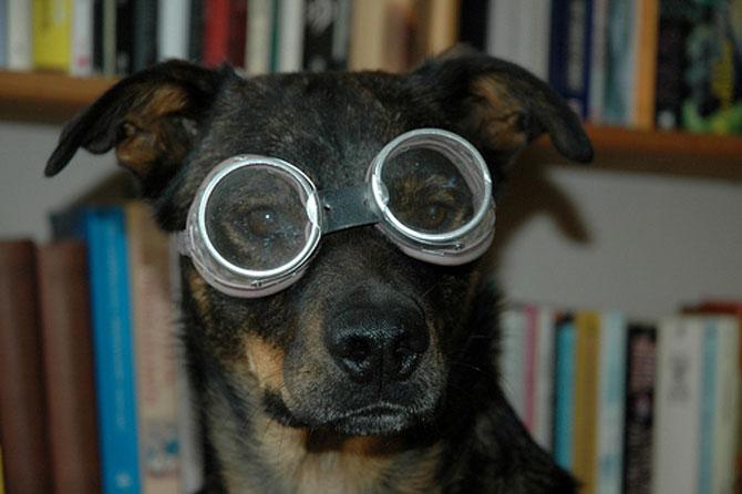 15 fotografii cu animale educate si inteligente - Poza 3