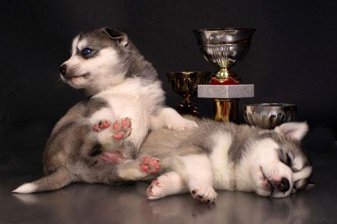 15 fotografii cu animale educate si inteligente - Poza 4