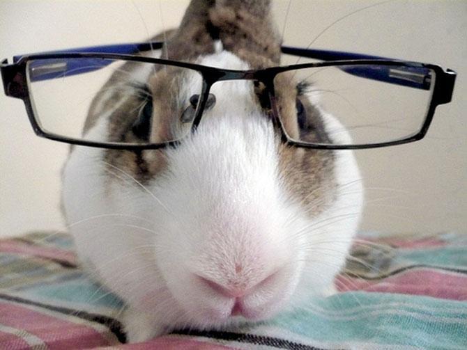 15 fotografii cu animale educate si inteligente - Poza 5
