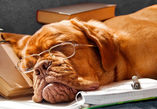 15 fotografii cu animale educate si inteligente - Poza 6