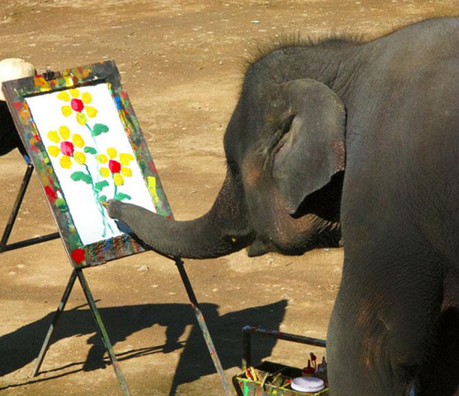 15 fotografii cu animale educate si inteligente - Poza 7