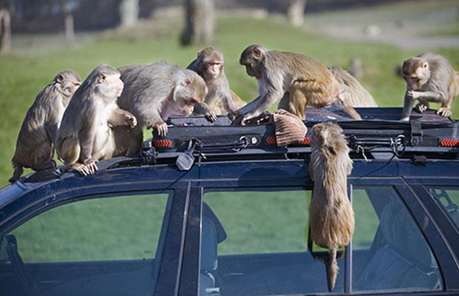 15 fotografii cu animale educate si inteligente - Poza 8