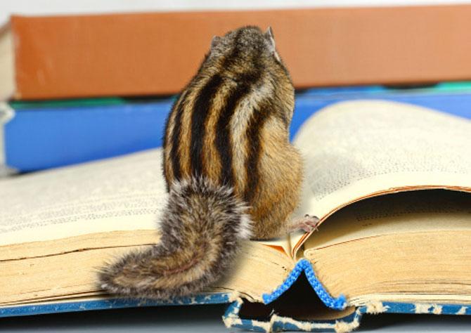 15 fotografii cu animale educate si inteligente - Poza 9