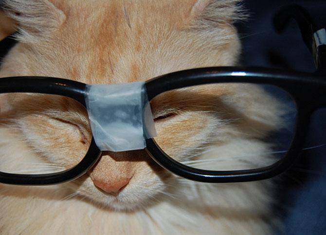 15 fotografii cu animale educate si inteligente - Poza 10