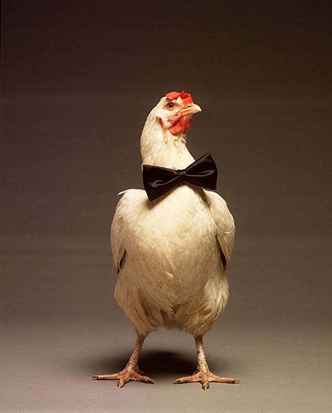15 fotografii cu animale educate si inteligente - Poza 12