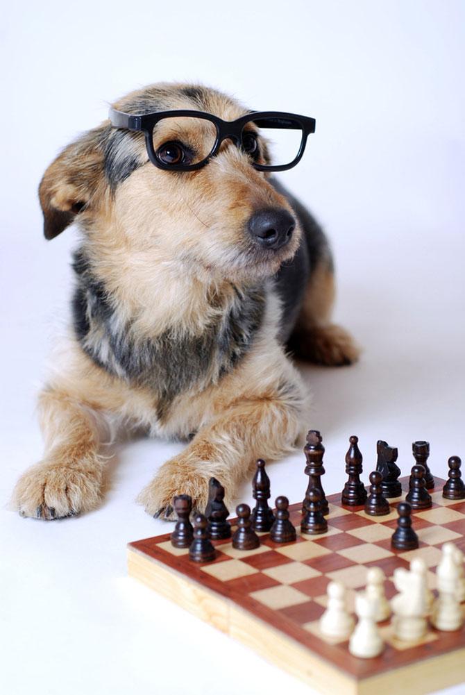 15 fotografii cu animale educate si inteligente - Poza 14