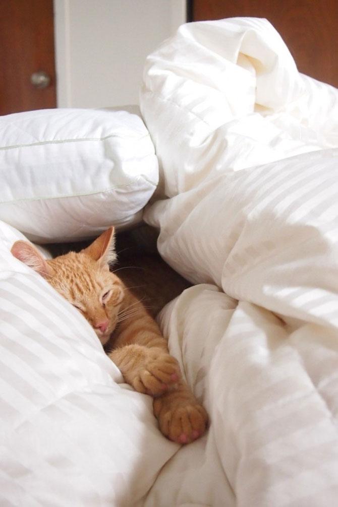 13 animale si culcusurile lor - Poza 5