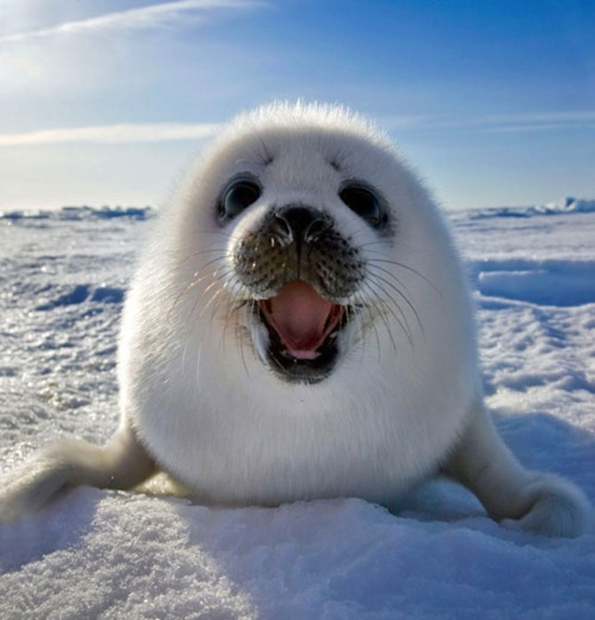 15 animale simpatice va intampina! - Poza 3