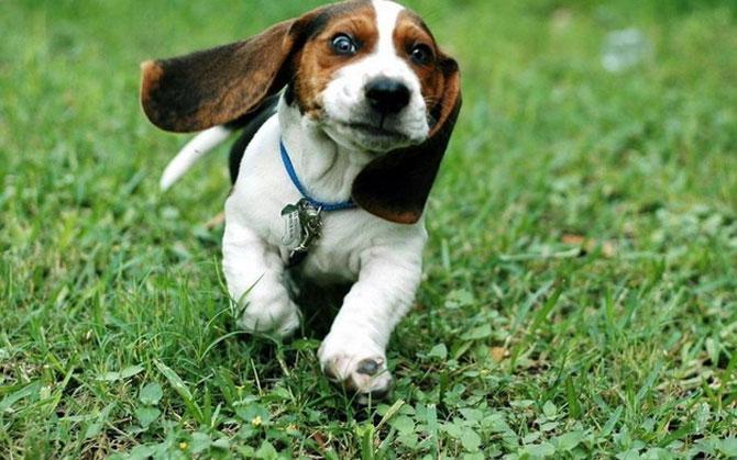 15 animale simpatice va intampina! - Poza 5