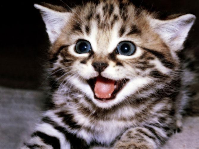 15 animale simpatice va intampina! - Poza 6