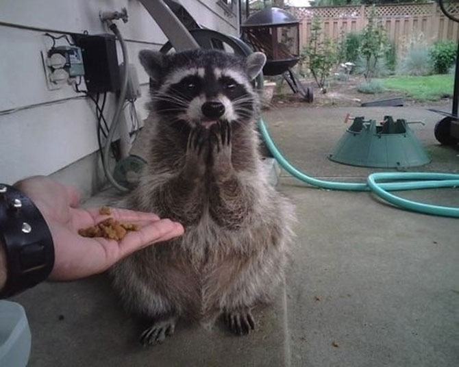 15 animale simpatice va intampina! - Poza 7