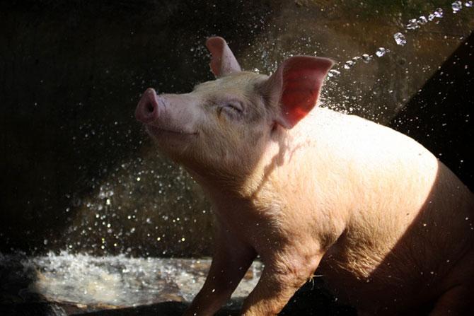 15 animale simpatice va intampina! - Poza 13