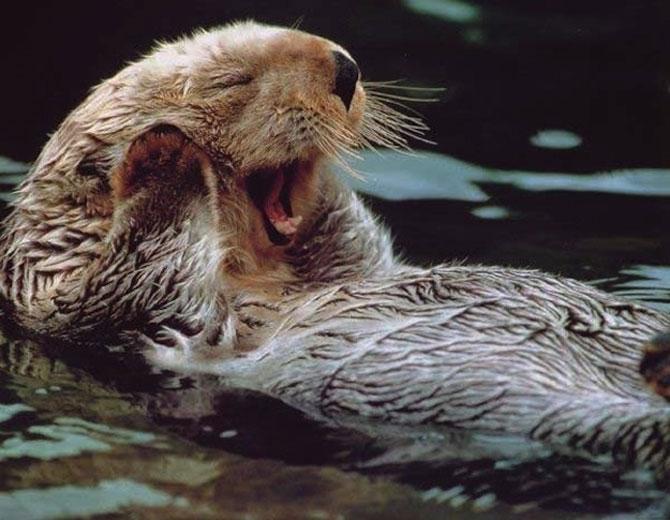 15 animale simpatice va intampina! - Poza 15
