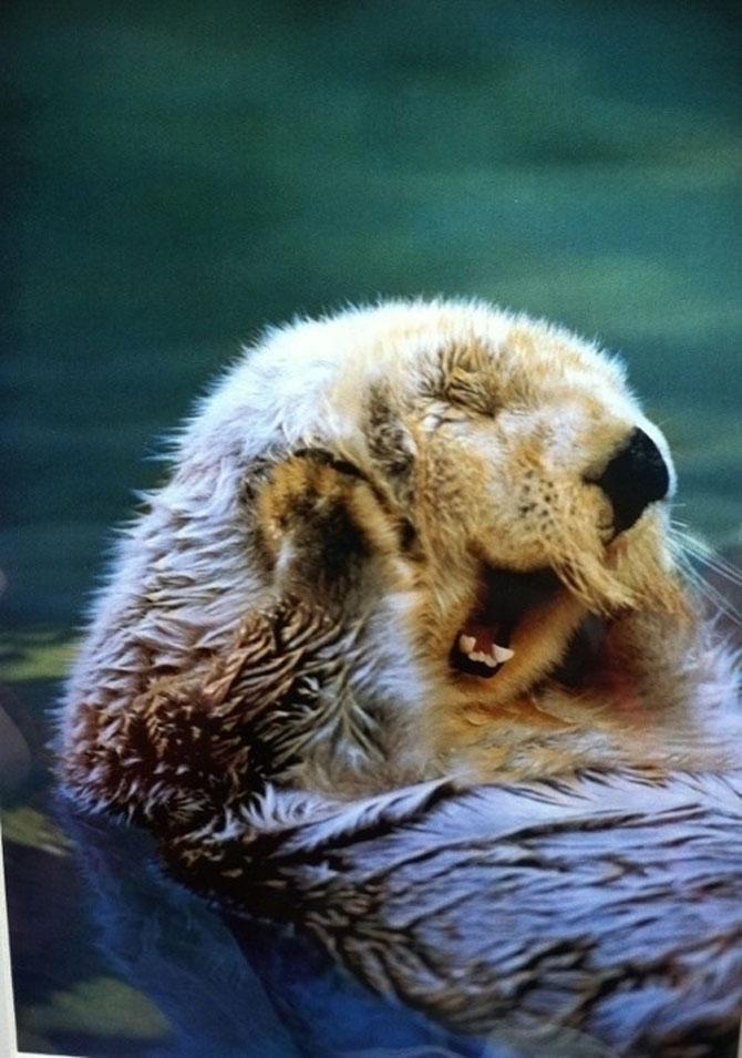 Cele mai fericite 15 animale din istorie! - Poza 3