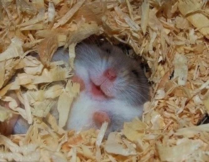 Cele mai fericite 15 animale din istorie! - Poza 4