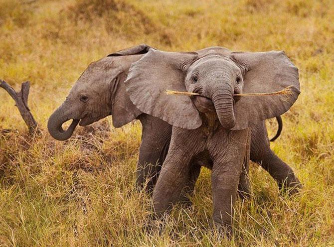 Cele mai fericite 15 animale din istorie! - Poza 8
