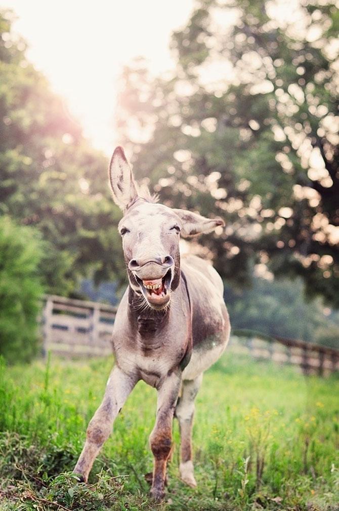 Cele mai fericite 15 animale din istorie! - Poza 12
