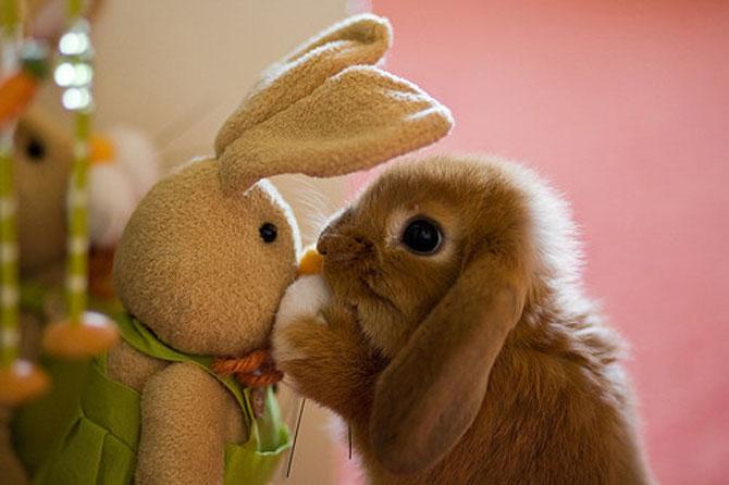 16 iepurasi adorabili de Paste - Poza 3