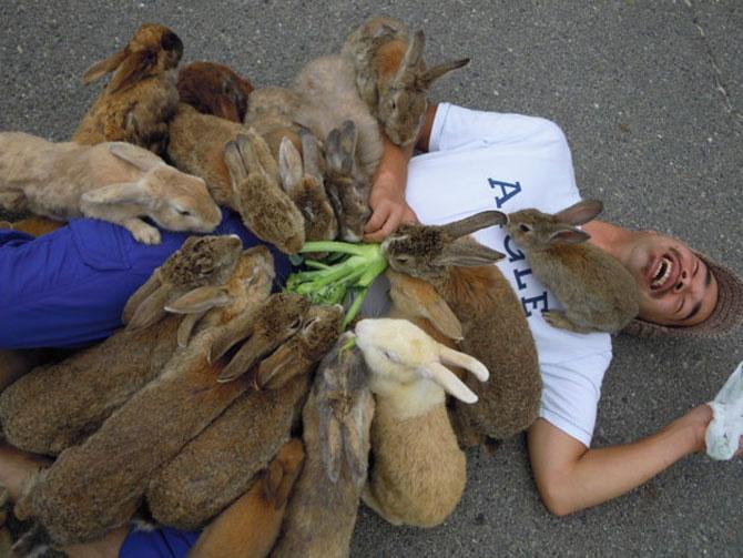 16 iepurasi adorabili de Paste - Poza 9
