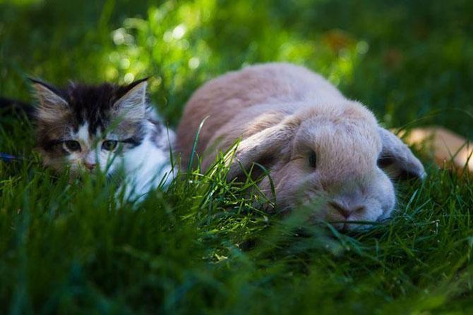16 iepurasi adorabili de Paste - Poza 15