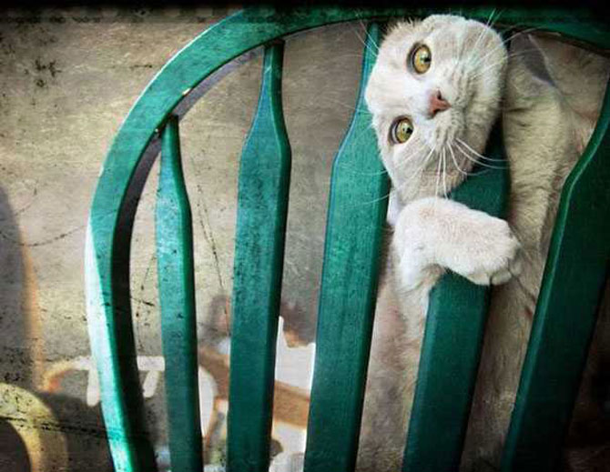15 caini si pisici se lupta cu mobila - Poza 15