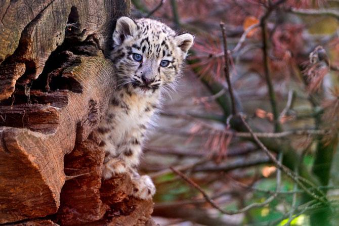 15 animale haioase vor sa va inveseleasca ziua - Poza 9