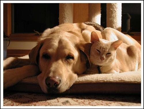 Caini si pisici in 22 de fotografii - Poza 13