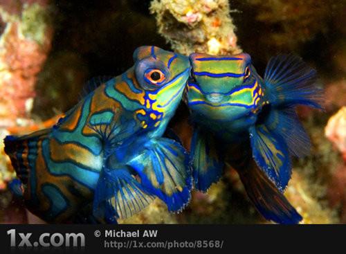 40 vederi splendide ale vietii marine - Poza 16