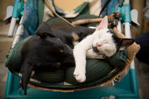 Caini si pisici in 22 de fotografii - Poza 21