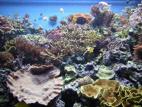 40 vederi splendide ale vietii marine - Poza 18