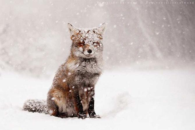 19 animale care se bucura de iarna! - Poza 1