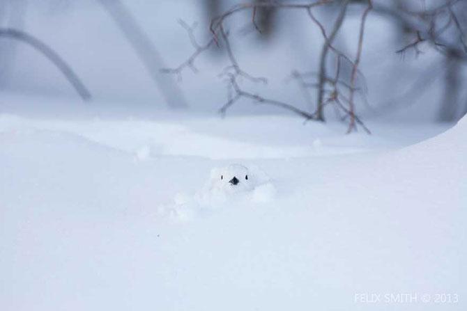19 animale care se bucura de iarna! - Poza 2