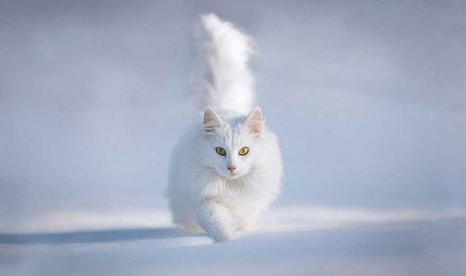 19 animale care se bucura de iarna! - Poza 3