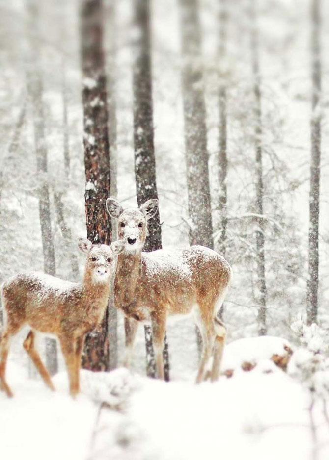 19 animale care se bucura de iarna! - Poza 4