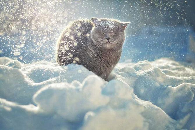 19 animale care se bucura de iarna! - Poza 5