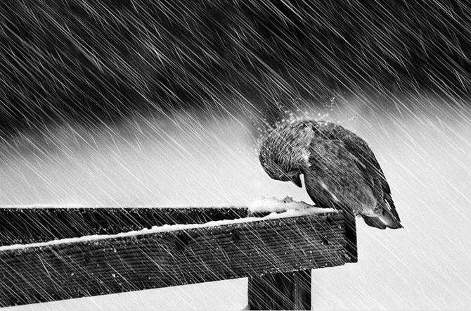 19 animale care se bucura de iarna! - Poza 6