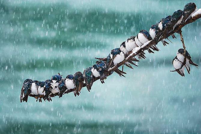 19 animale care se bucura de iarna! - Poza 7