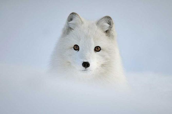 19 animale care se bucura de iarna! - Poza 8