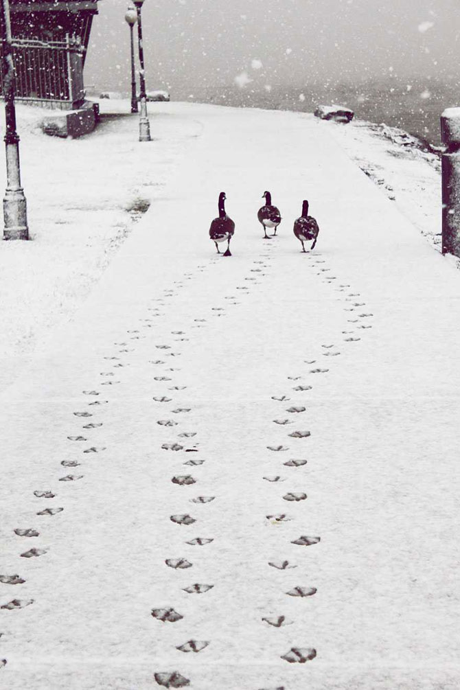 19 animale care se bucura de iarna! - Poza 9