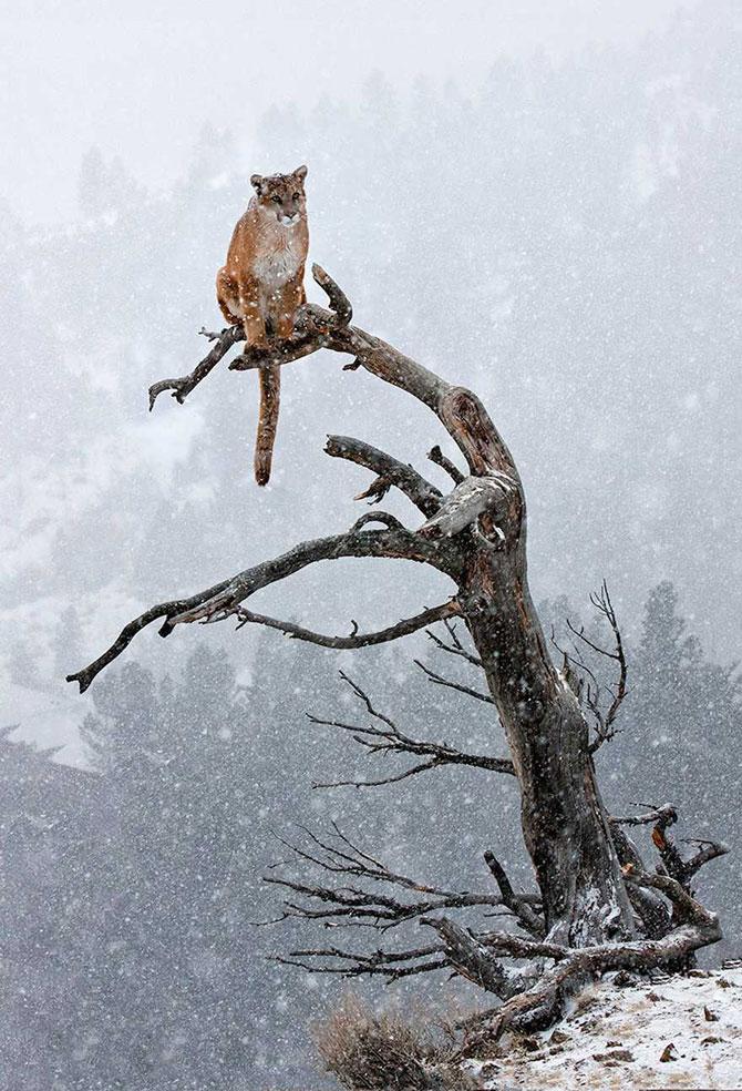 19 animale care se bucura de iarna! - Poza 10