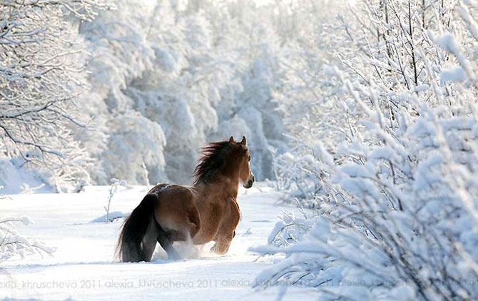 19 animale care se bucura de iarna! - Poza 11