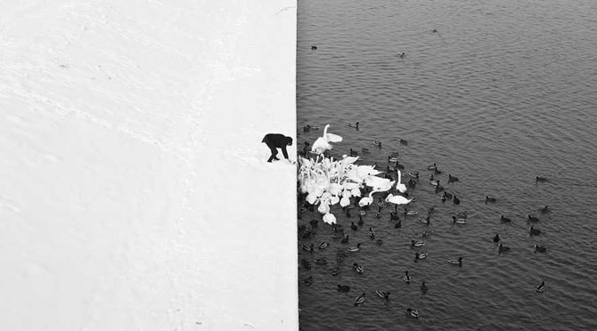 19 animale care se bucura de iarna! - Poza 12