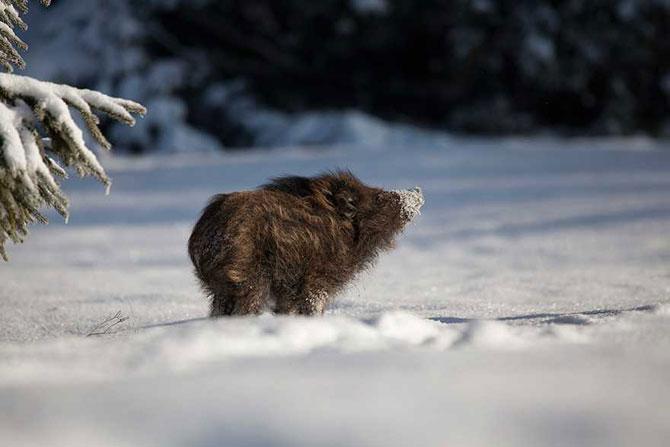 19 animale care se bucura de iarna! - Poza 13