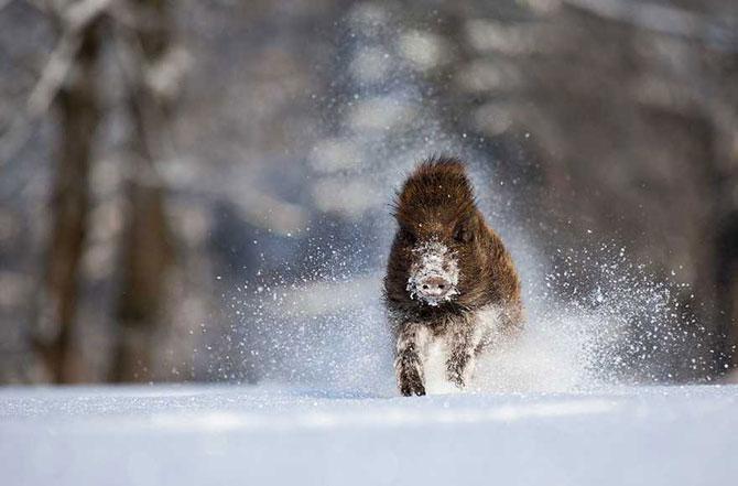 19 animale care se bucura de iarna! - Poza 14