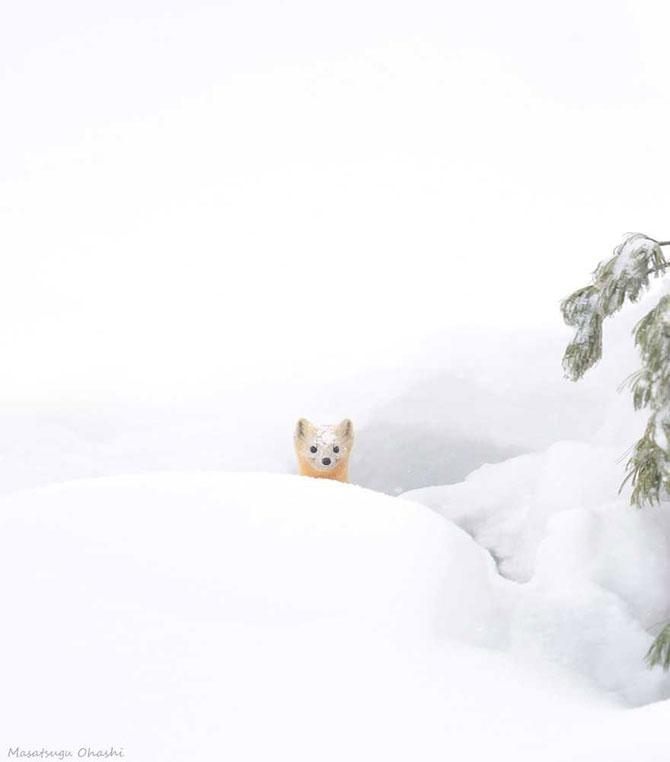19 animale care se bucura de iarna! - Poza 15