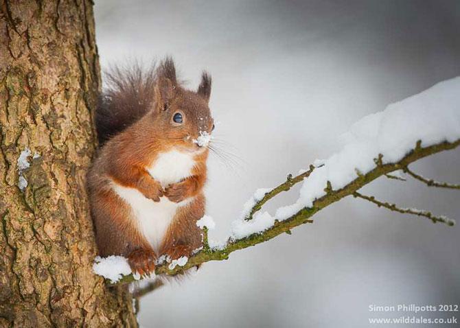 19 animale care se bucura de iarna! - Poza 16