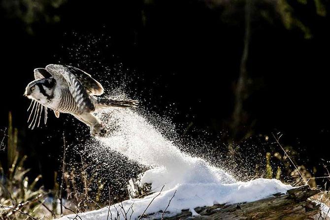 19 animale care se bucura de iarna! - Poza 18