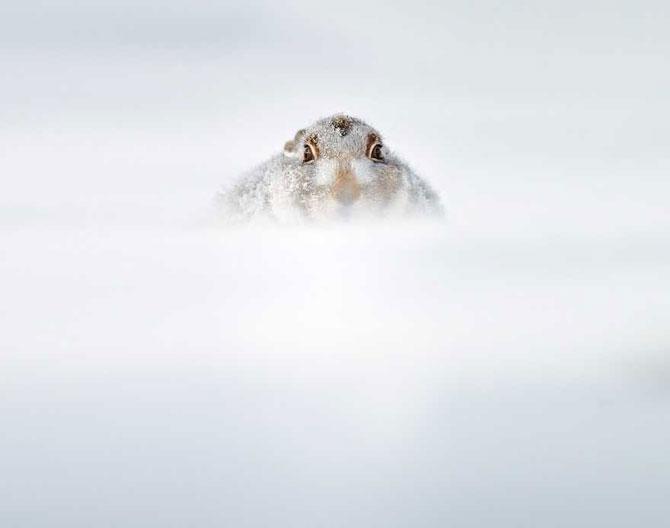19 animale care se bucura de iarna! - Poza 19